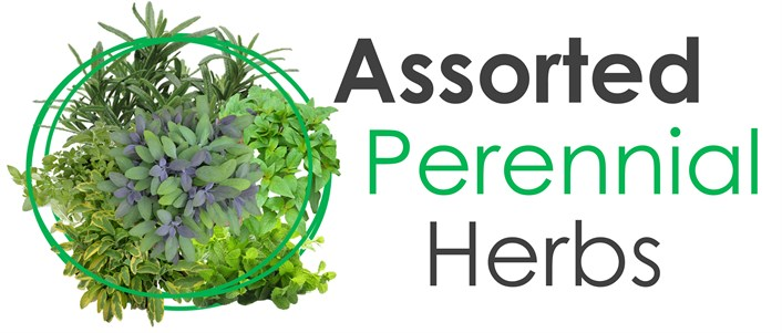 Wholesale Assorted Perennial Herb Plants