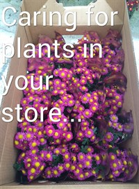 caring for plants instore